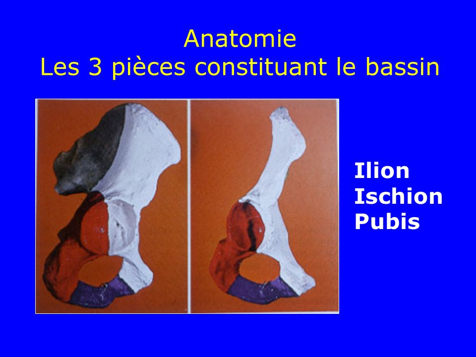 Anatomie Les 3 pièces constituant le bassin