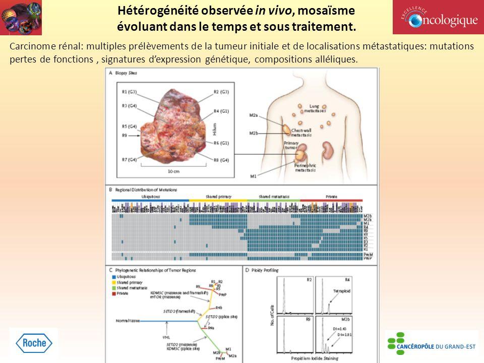 Hétérogénéité observée in vivo, mosaïsme