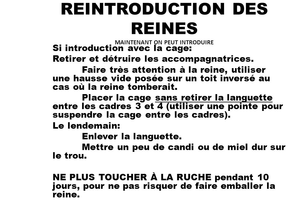 REINTRODUCTION DES REINES MAINTENANT ON PEUT INTRODUIRE