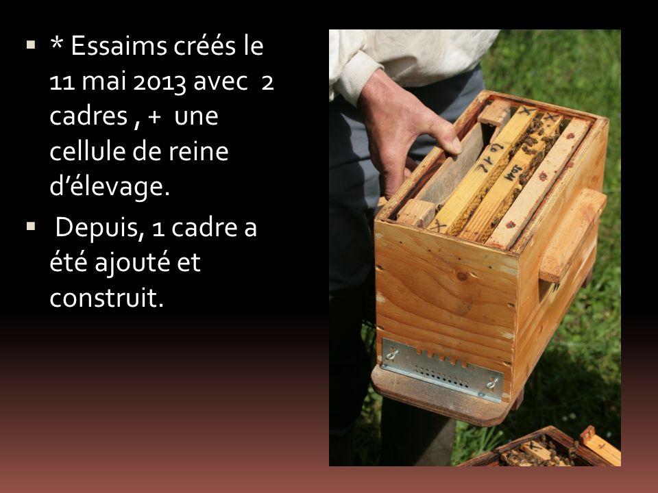 * Essaims créés le 11 mai 2013 avec 2 cadres , + une cellule de reine d'élevage.