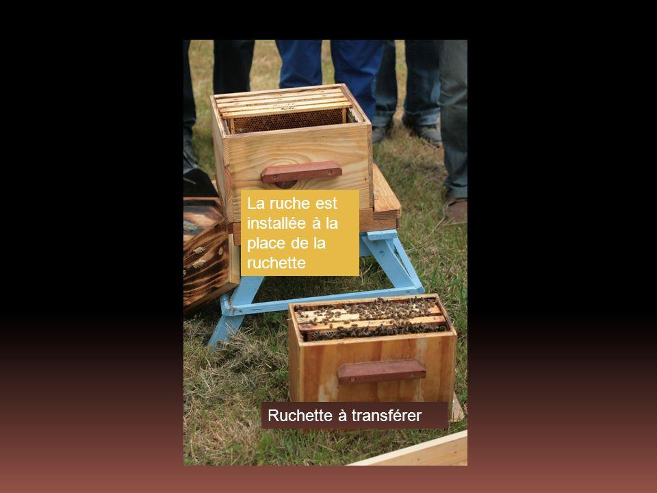 La ruche est installée à la place de la ruchette