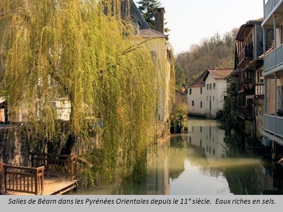 Salies de Béarn dans les Pyrénées Orientales depuis le 11° siècle