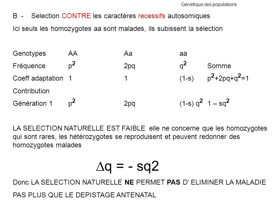 B - Selection CONTRE les caractères recessifs autosomiques