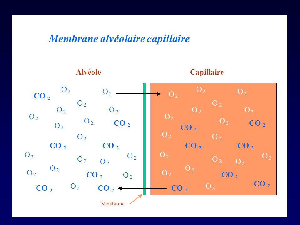 Membrane alvéolaire capillaire