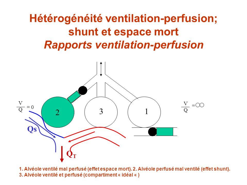 Hétérogénéité ventilation-perfusion; shunt et espace mort