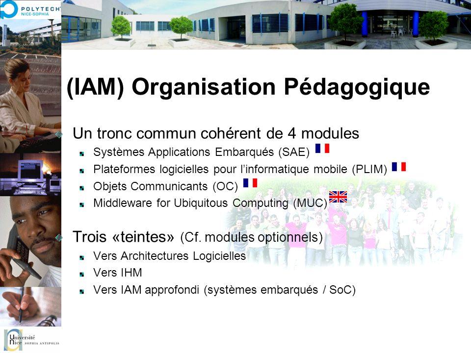 (IAM) Organisation Pédagogique