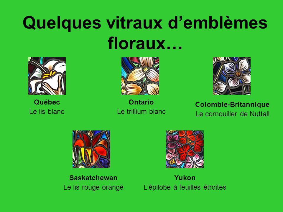 Quelques vitraux d'emblèmes floraux… Colombie-Britannique