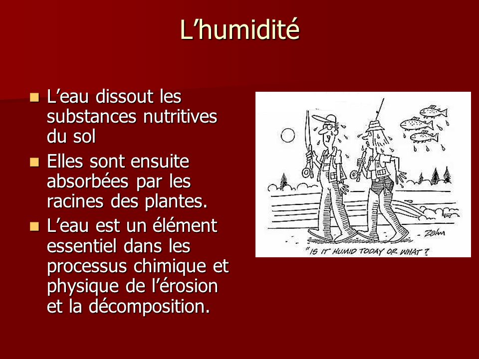 L'humidité L'eau dissout les substances nutritives du sol