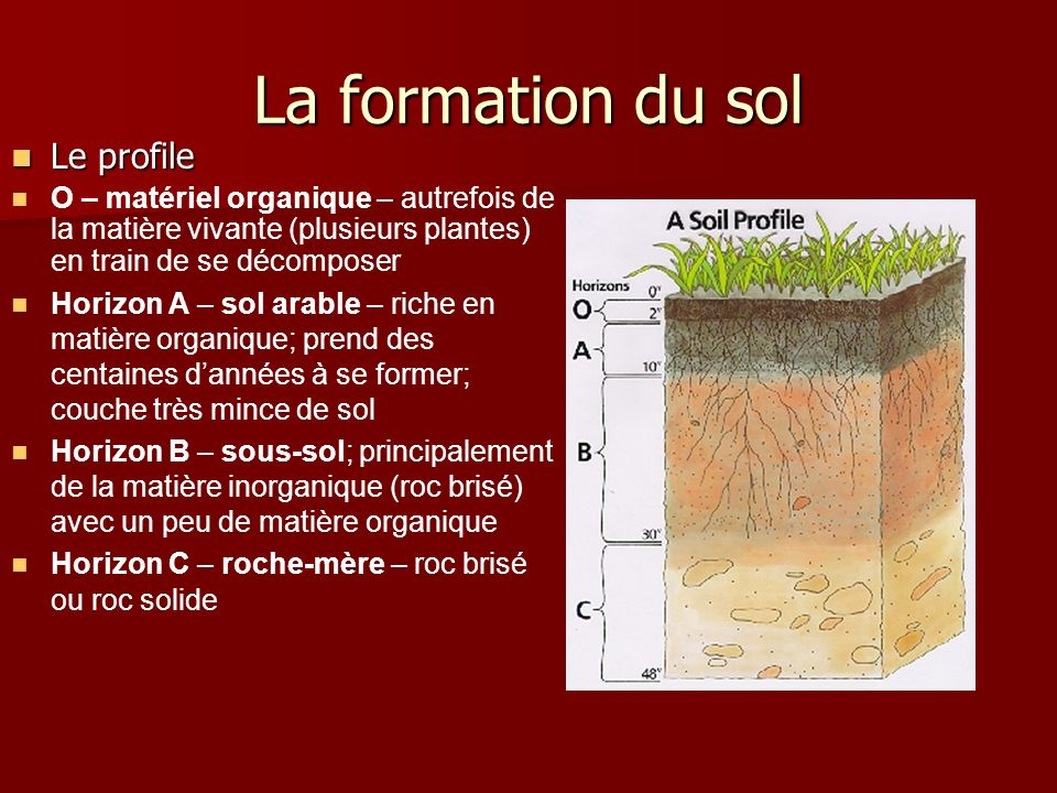 La formation du sol Le profile