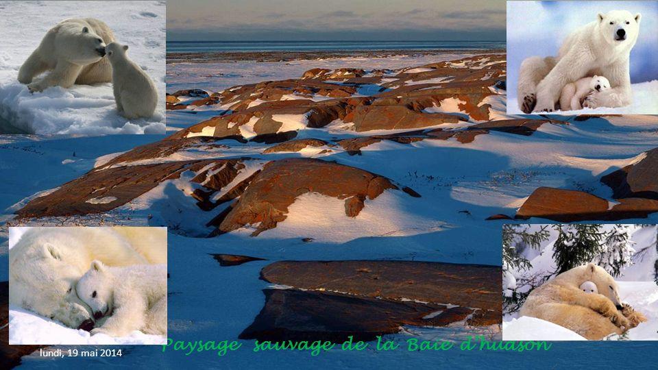 Paysage sauvage de la Baie d'hudson
