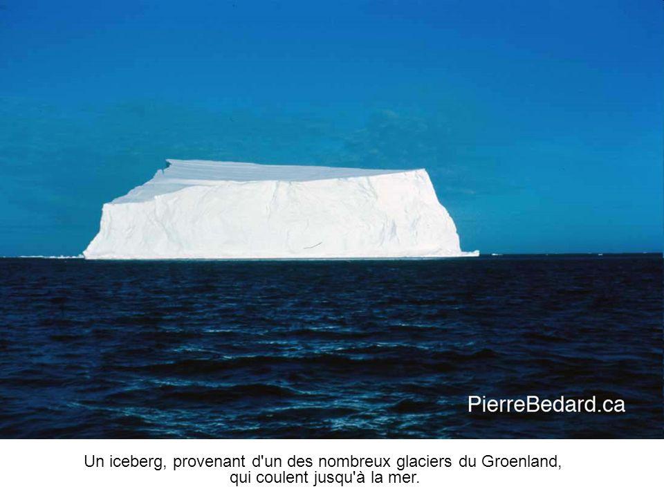 Un iceberg, provenant d un des nombreux glaciers du Groenland,