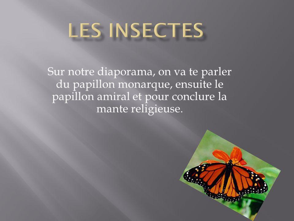 Les insectes Sur notre diaporama, on va te parler du papillon monarque, ensuite le papillon amiral et pour conclure la mante religieuse.