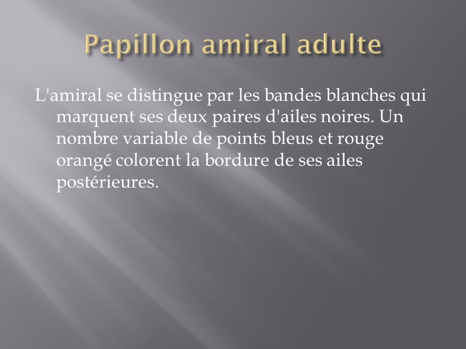 Papillon amiral adulte