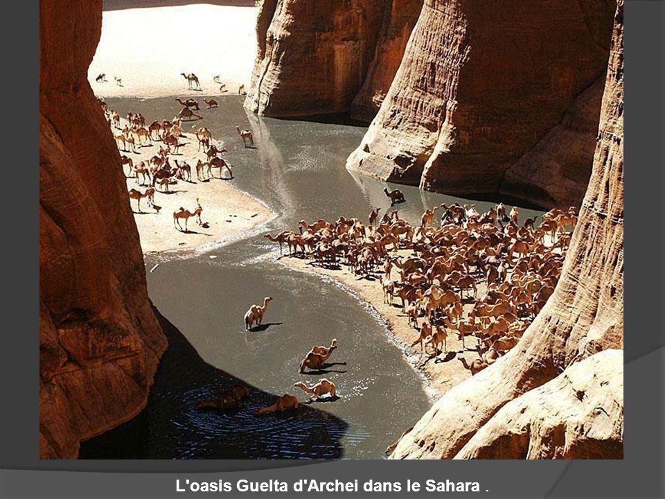 L oasis Guelta d Archei dans le Sahara .