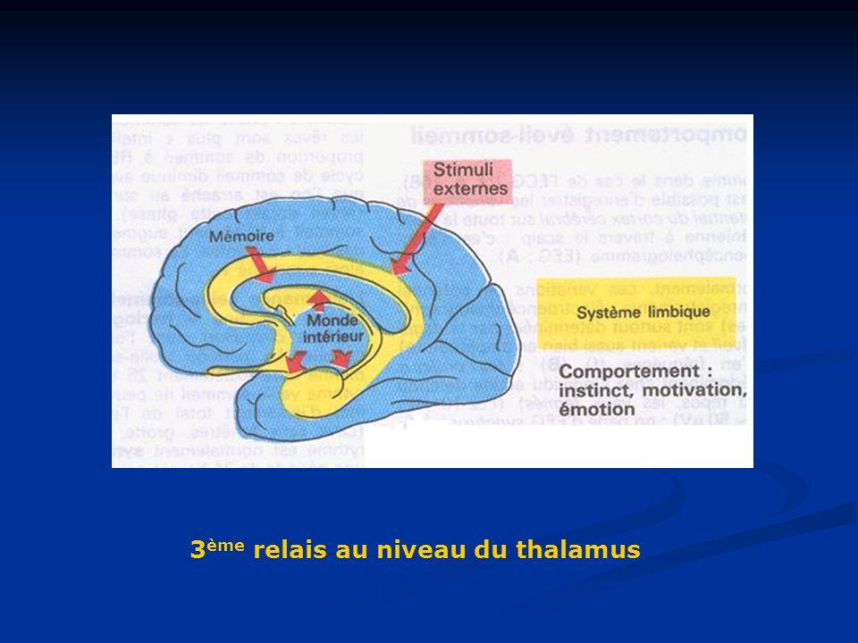 3ème relais au niveau du thalamus