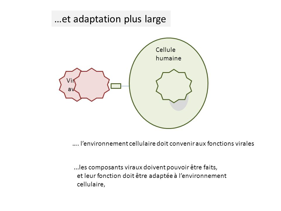 …et adaptation plus large