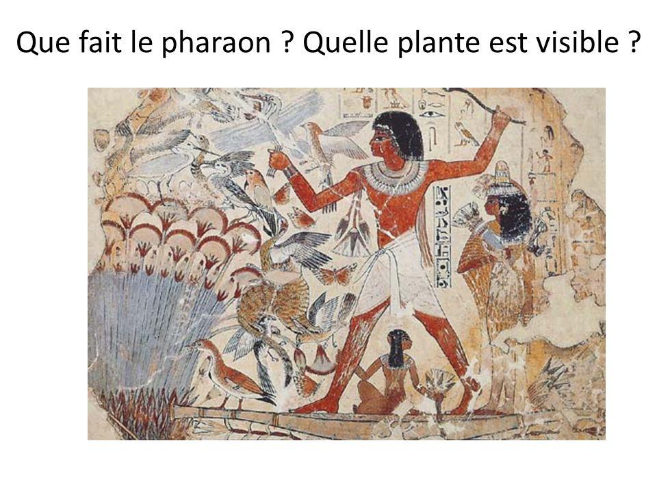 Que fait le pharaon Quelle plante est visible
