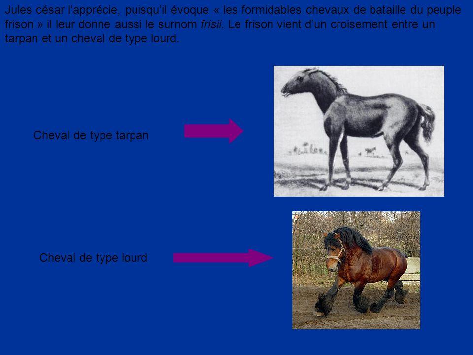 Jules césar l'apprécie, puisqu'il évoque « les formidables chevaux de bataille du peuple frison » il leur donne aussi le surnom frisii. Le frison vient d'un croisement entre un tarpan et un cheval de type lourd.