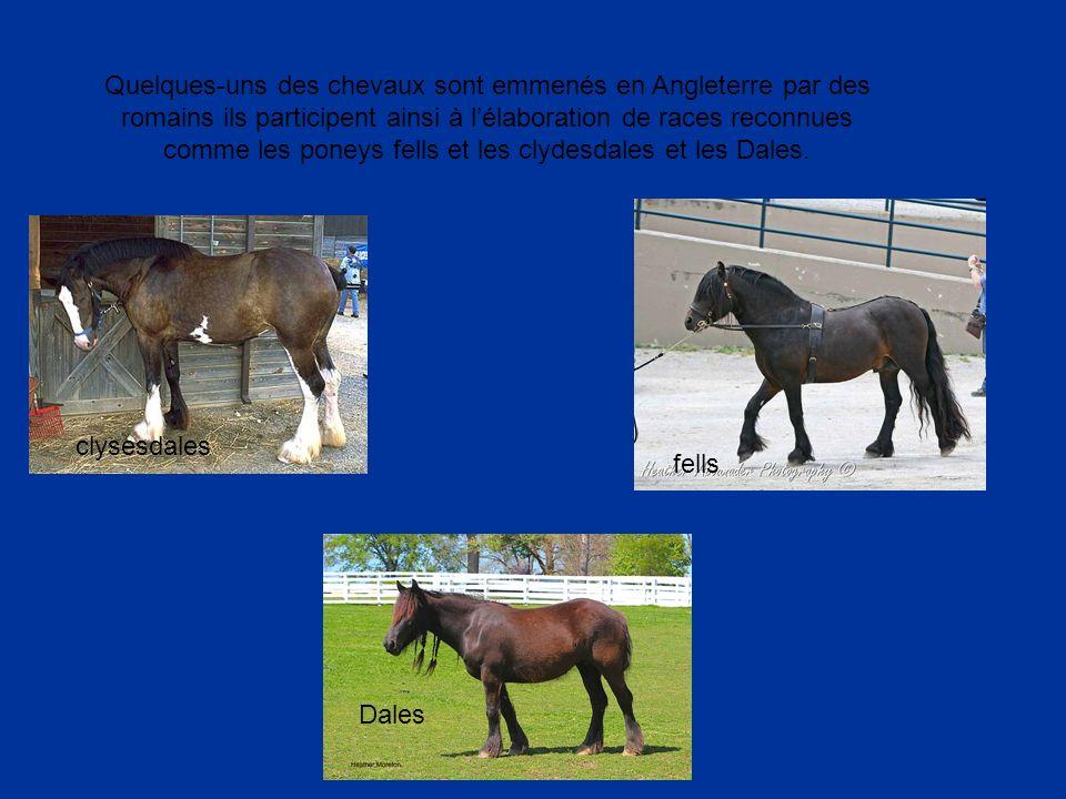 Quelques-uns des chevaux sont emmenés en Angleterre par des romains ils participent ainsi à l'élaboration de races reconnues comme les poneys fells et les clydesdales et les Dales.