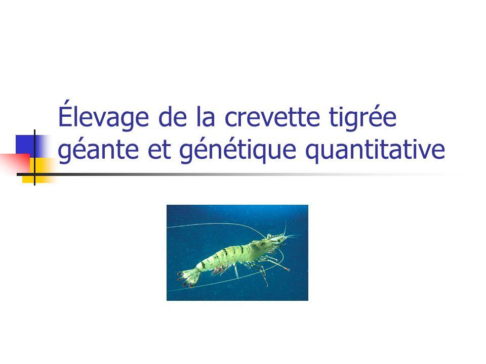 Élevage de la crevette tigrée géante et génétique quantitative