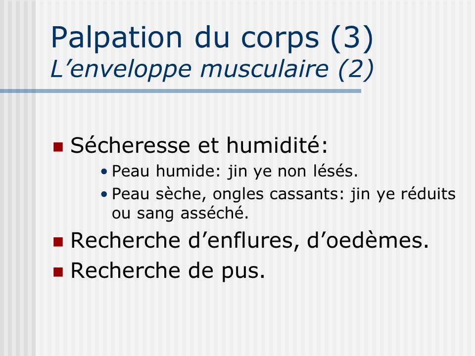 Palpation du corps (3) L'enveloppe musculaire (2)