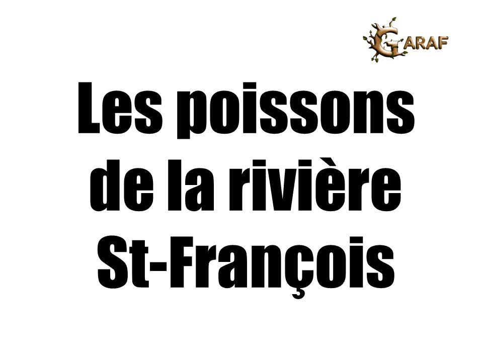 Les poissons de la rivière St-François