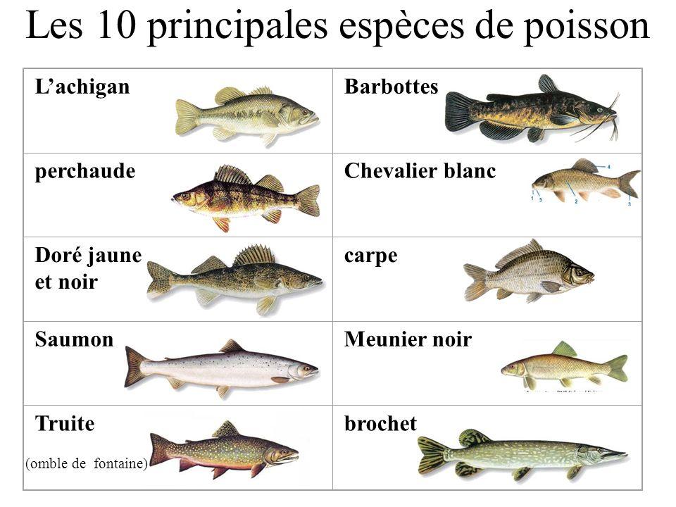 Les 10 principales espèces de poisson