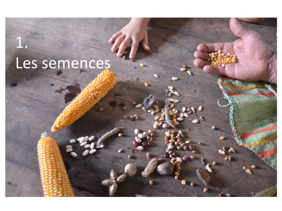 1. Les semences