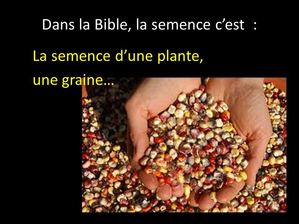 Dans la Bible, la semence c'est :