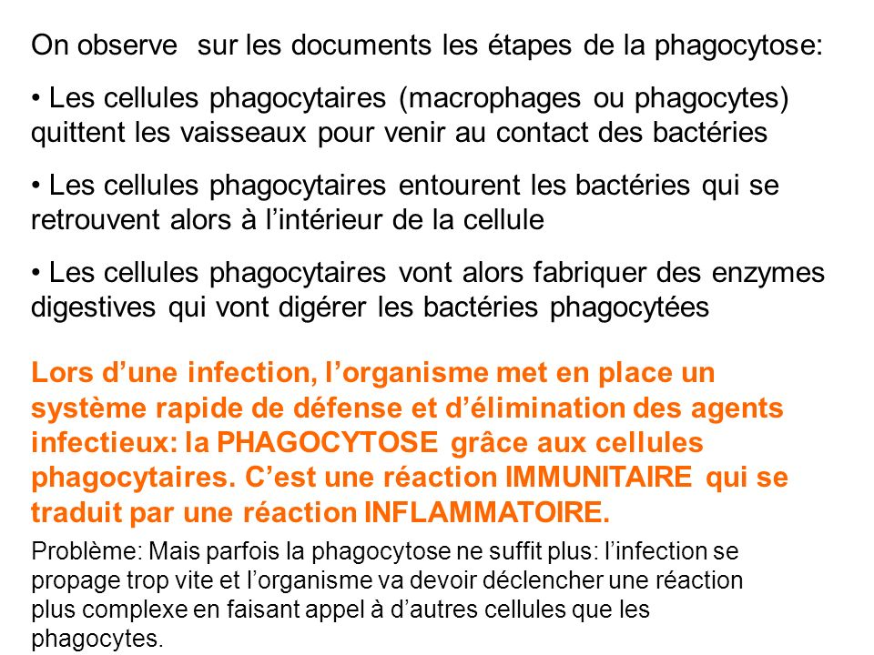 On observe sur les documents les étapes de la phagocytose: