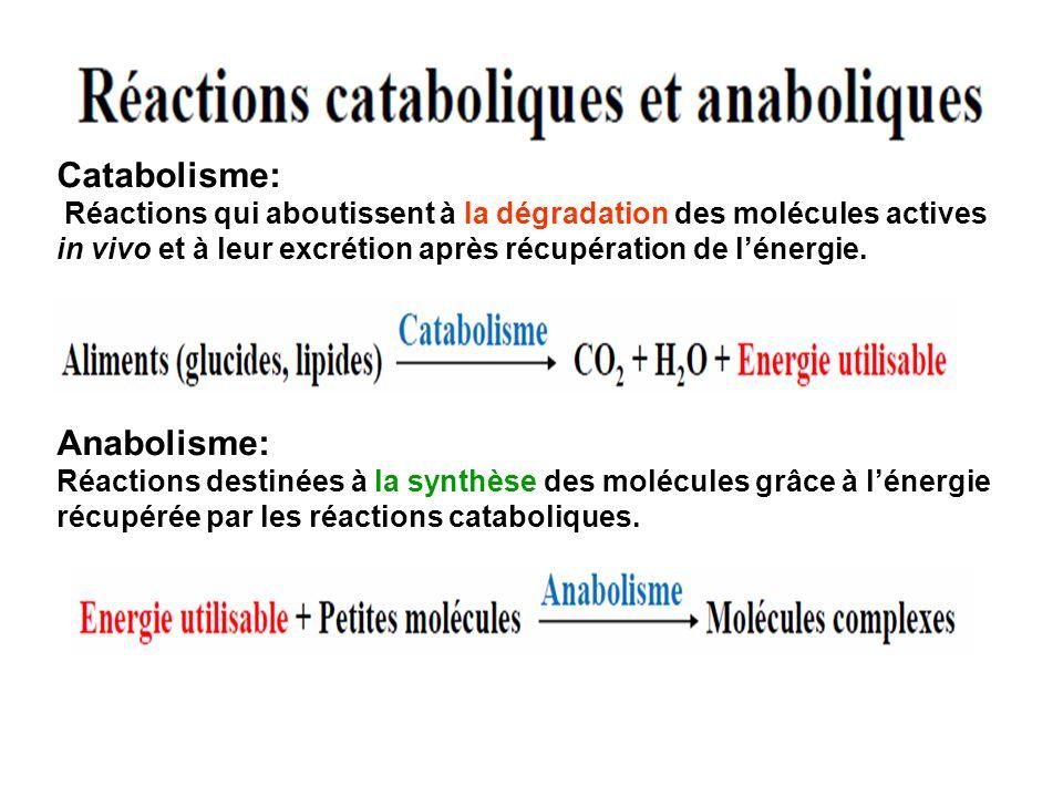 Catabolisme: Anabolisme:
