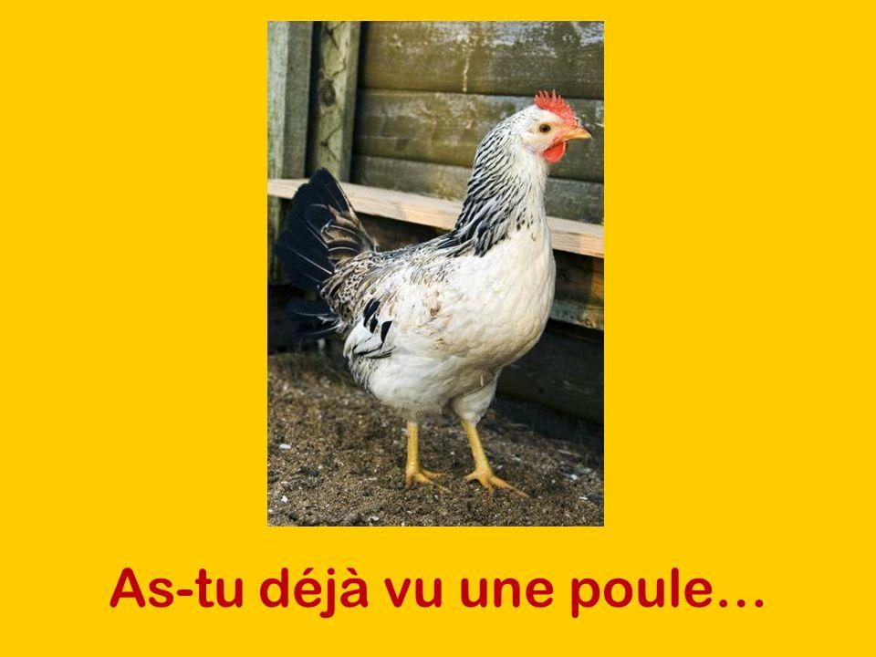 As-tu déjà vu une poule…