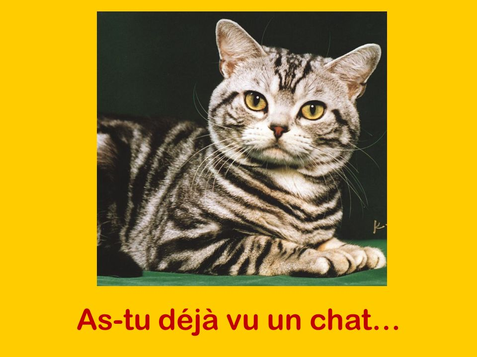 As-tu déjà vu un chat…
