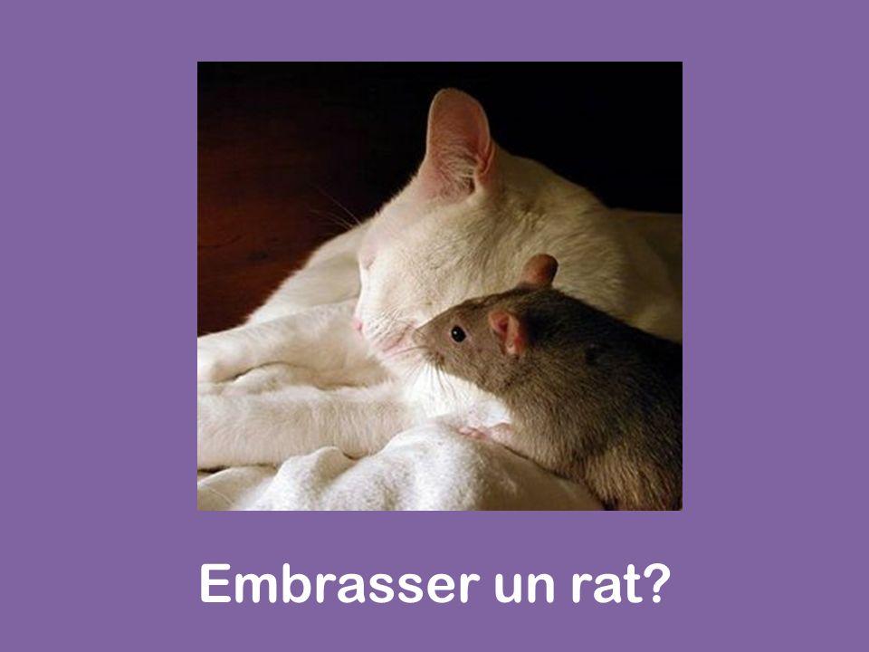 Embrasser un rat