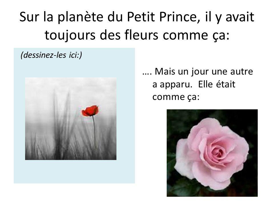 Sur la planète du Petit Prince, il y avait toujours des fleurs comme ça: