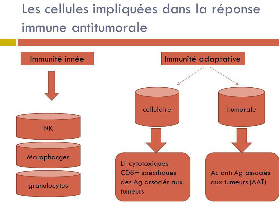 Les cellules impliquées dans la réponse immune antitumorale