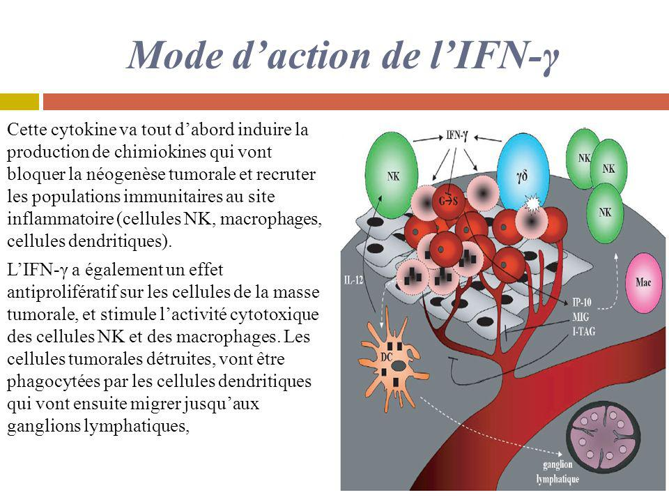 Mode d'action de l'IFN-γ