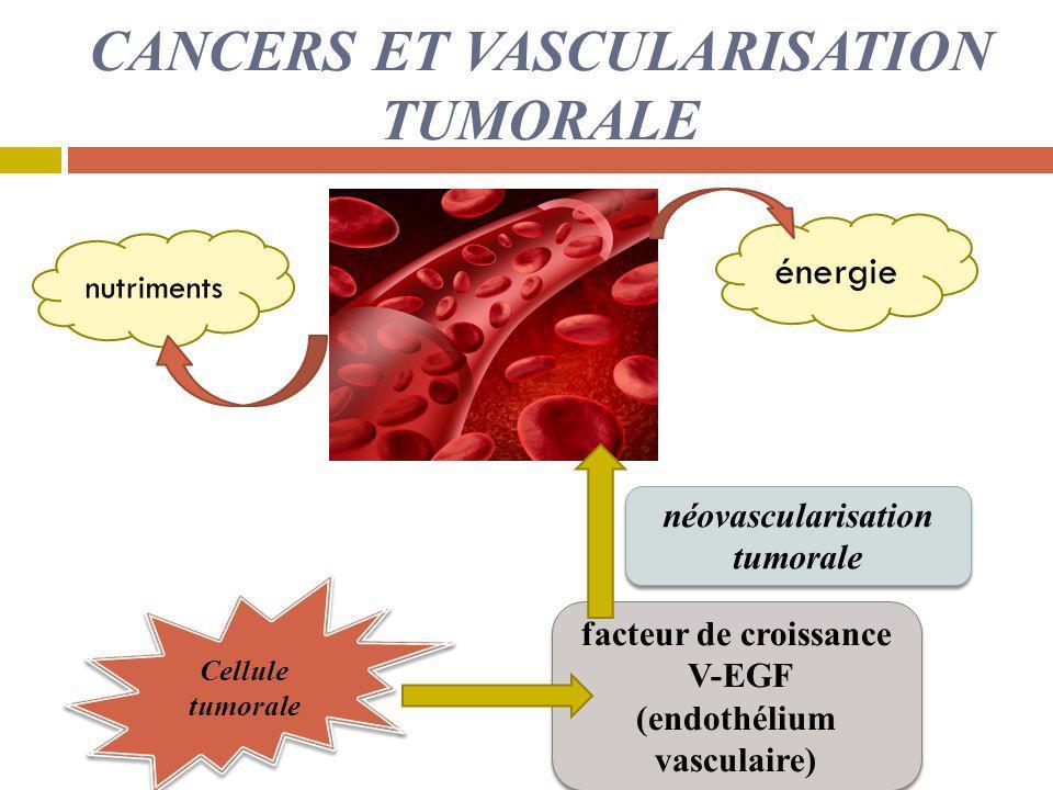 CANCERS ET VASCULARISATION TUMORALE