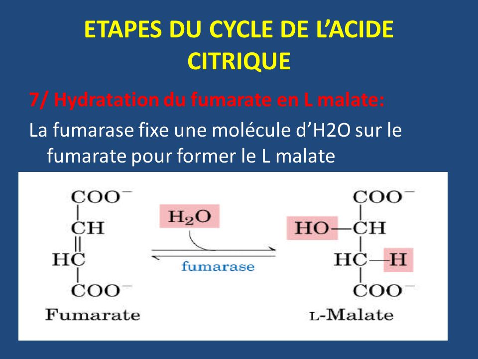 ETAPES DU CYCLE DE L'ACIDE CITRIQUE