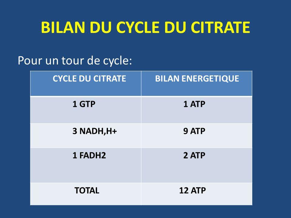 BILAN DU CYCLE DU CITRATE