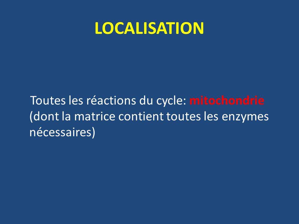 LOCALISATION Toutes les réactions du cycle: mitochondrie (dont la matrice contient toutes les enzymes nécessaires)