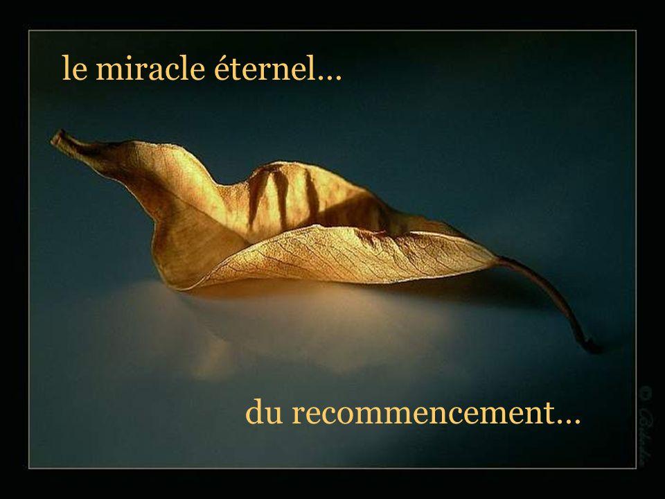 le miracle éternel… du recommencement…