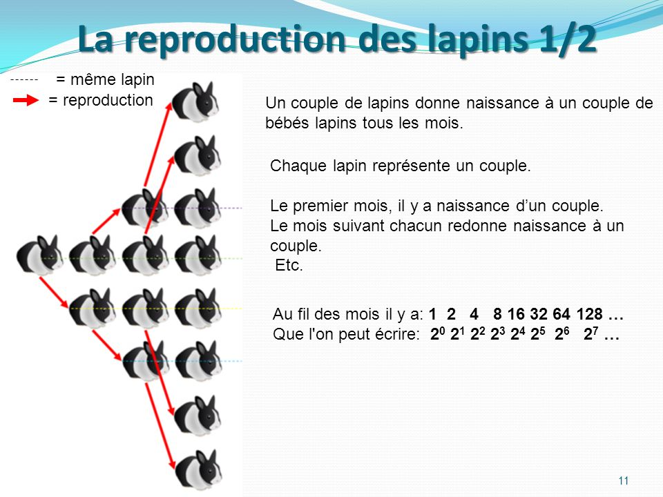 La reproduction des lapins 1/2