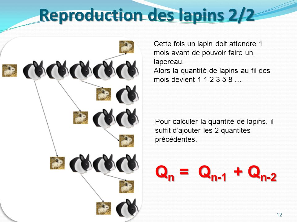 Reproduction des lapins 2/2