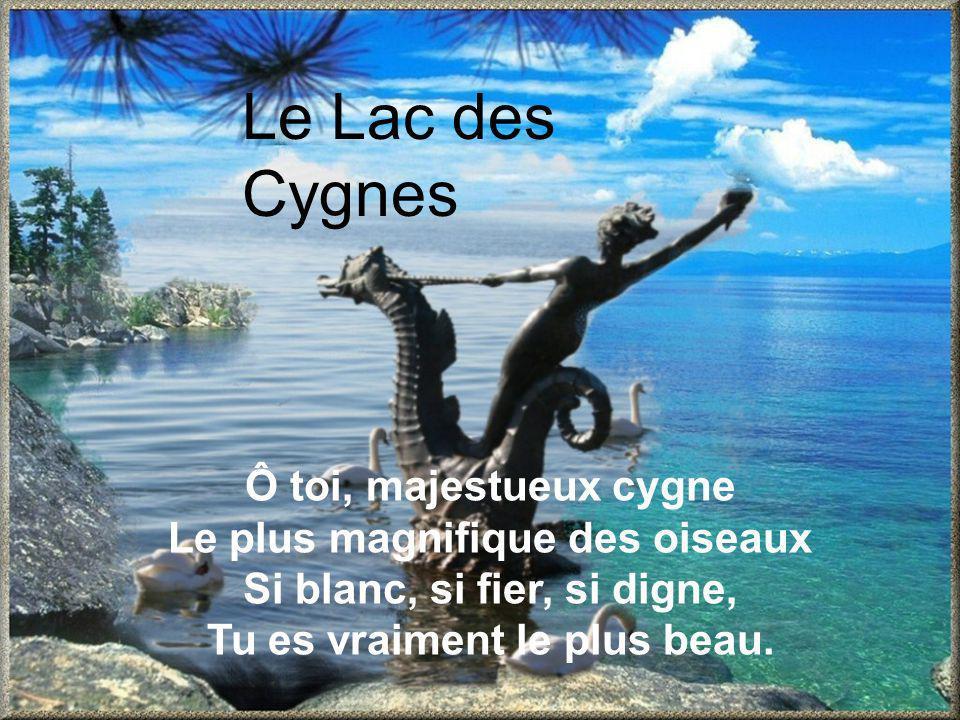 Le Lac des Cygnes Ô toi, majestueux cygne