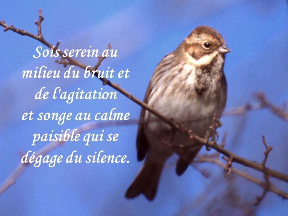 Sois serein au milieu du bruit et de l agitation et songe au calme paisible qui se dégage du silence.