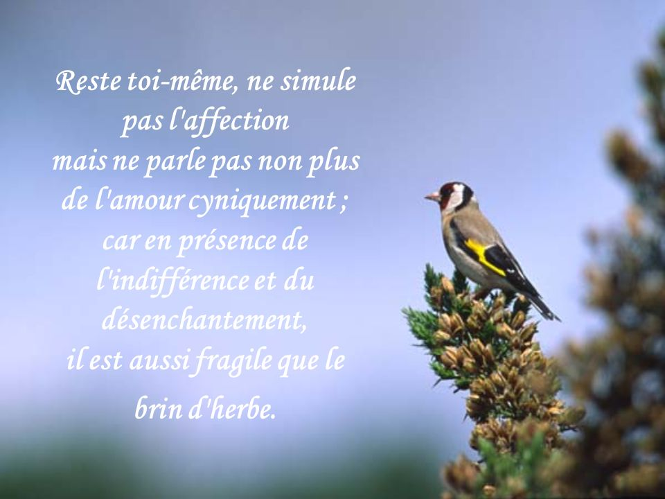 Reste toi-même, ne simule pas l affection mais ne parle pas non plus de l amour cyniquement ; car en présence de l indifférence et du désenchantement, il est aussi fragile que le brin d herbe.
