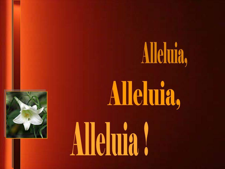 Alleluia, Alleluia, Alleluia !