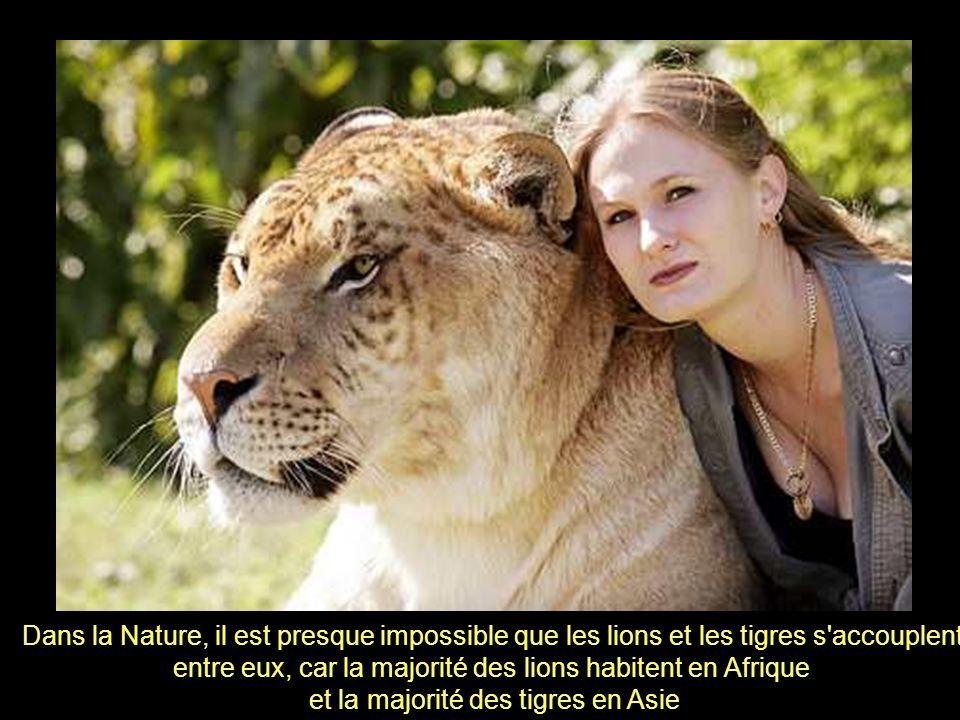 entre eux, car la majorité des lions habitent en Afrique