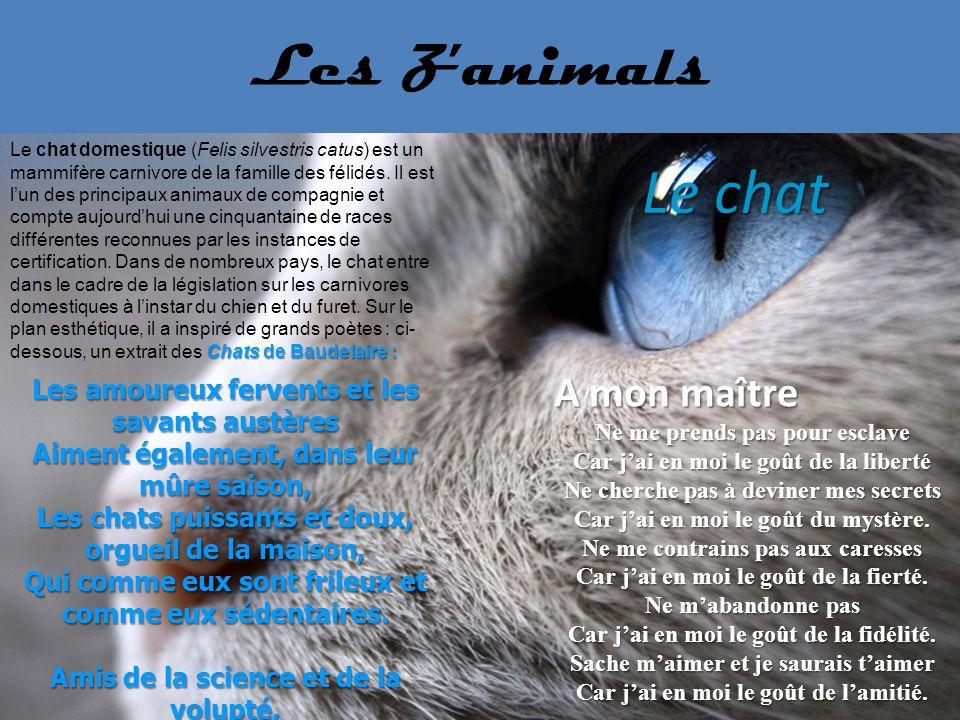 Le chat Les Z'animals A mon maître